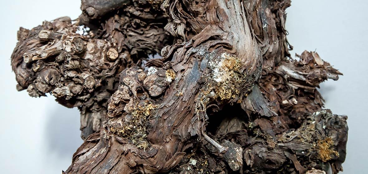 Peter Obermeier | Galerie: <p>Bäume und Holz</p>